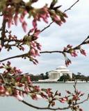 Jefferson Memorial imagens de stock royalty free