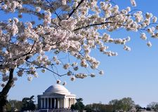 Jefferson memorial. In time of cherry blossom Royalty Free Stock Photos