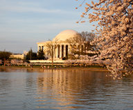 Jefferson Memorial behind cherry blossom Stock Photos