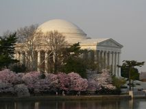 Jefferson Memorial Blossoms. Jefferson Memorial in Washington DC with cherry blossoms in bloom stock photography