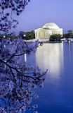 Jefferson Memorial Cherries Royalty Free Stock Images