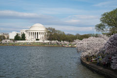 Jefferson Memorial during the Cherry Blossom Festival Stock Images