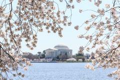 The Jefferson Memorial during the Cherry Blossom Festival. Stock Photos
