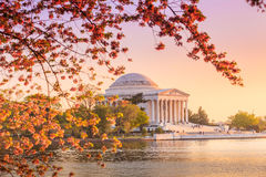 The Jefferson Memorial during the Cherry Blossom Festival in DC Royalty Free Stock Photos
