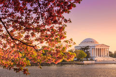 The Jefferson Memorial during the Cherry Blossom Festival in DC Royalty Free Stock Images