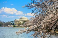 The Jefferson Memorial during the Cherry Blossom Festival. Washi Royalty Free Stock Images