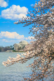 The Jefferson Memorial during the Cherry Blossom Festival. Washi Stock Image