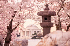Jefferson Memorial during the Cherry Blossom Festival. Washingt Royalty Free Stock Photos