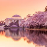 The Jefferson Memorial during the Cherry Blossom Festival Royalty Free Stock Photos