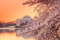 The Jefferson Memorial during the Cherry Blossom Festival Stock Photos