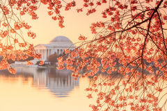 The Jefferson Memorial during the Cherry Blossom Festival Stock Photo