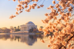 The Jefferson Memorial during the Cherry Blossom Festival Stock Photography