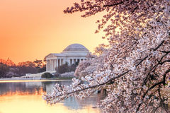 The Jefferson Memorial during the Cherry Blossom Festival Stock Photos