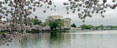 Jefferson Memorial Cherry Blossom Scenic Panorama. Storm clouds and cherry blossoms surround the Jefferson Memorial during the Cherry Blossom Festival in Stock Image
