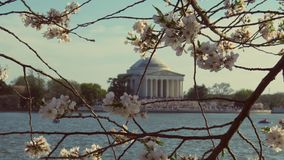 Historic Cherry Blossom stock images