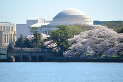Jefferson Memorial and Cherry Blossoms. This photo was taken in Washington DC. The Washington Monument is an obelisk on the National Mall in Washington, D.C Royalty Free Stock Photo