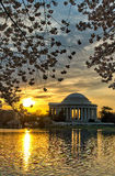 The Jefferson Memorial and Cherry Blossoms at Sunrise Royalty Free Stock Images