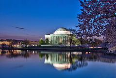 Jefferson Memorial and Cherry Blossoms at Sunrise Stock Photography