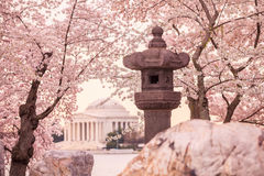 Jefferson Memorial durante Cherry Blossom Festival Foto de Stock Royalty Free