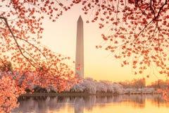 Jefferson Memorial durante Cherry Blossom Festival Foto de archivo libre de regalías