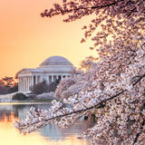 Jefferson Memorial durante Cherry Blossom Festival Imagen de archivo libre de regalías