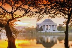 Jefferson Memorial durante Cherry Blossom Festival en DC Imágenes de archivo libres de regalías