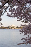 Jefferson Memorial framed by Cherry Blossom over T. Jefferson Monument reflected in Tidal Basin and framed by cherry blossom trees stock image