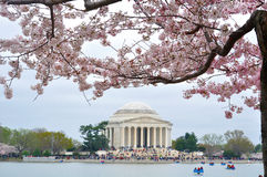 Jefferson Memorial pendant le Cherry Blossom Photo stock