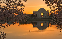 Jefferson Memorial Sunrise Stock Photos