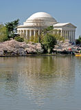 Jefferson Memorial on the Tidal Basin. Cherry blossoms surround the Jefferson Memorial during the Cherry Blossom Festival in Washington, D.C Royalty Free Stock Photos