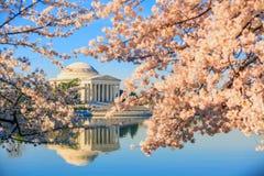 Jefferson Memorial under Cherry Blossom Festival arkivbild