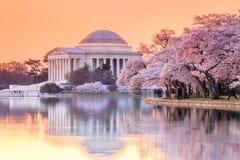 Jefferson Memorial under Cherry Blossom Festival arkivbilder