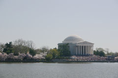 Jefferson memorial w/ blossoms. Jefferson memorial during the annual cherry blossom festival. large crowds of tourists on the steps. washington, dc stock images
