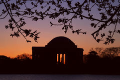 Jefferson Memorial in Washington DC at Sunrise. Early morning horizontal image of the Jefferson Memorial taken during the Cherry Blossom Festival with Jefferson Stock Photo