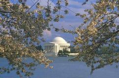 Jefferson minnesmärke med fjäderCherryblomningar, Washington, D C Royaltyfri Bild