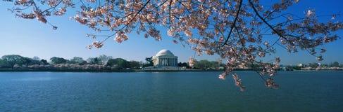 Jefferson minnesmärke med Cherryblomningar Royaltyfria Bilder