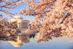 Jefferson pomnik podczas Czereśniowego okwitnięcia festiwalu fotografia royalty free