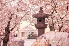 Jefferson pomnik podczas Czereśniowego okwitnięcia festiwalu Zdjęcie Royalty Free