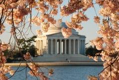 Jefferson pomnik Podczas Czereśniowego okwitnięcia kwiatu Fotografia Royalty Free