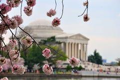 Jefferson pomnik w czereśniowym kwiacie obrazy stock