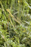 jego pajęczyna Obrazy Stock