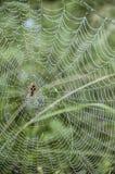 jego pajęczyna Zdjęcie Royalty Free