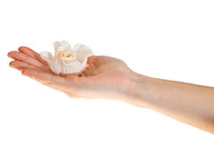 jej mienia palmy różana kobieta Fotografia Stock