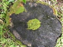 Jeju-Insel-Korea-Baumwachstumsring stockbilder