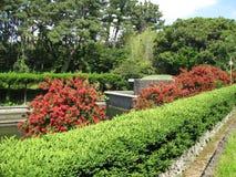 Jeju  Island ,  botanical garden, Callistemon Stock Images