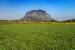 Jeju Island Royalty Free Stock Image