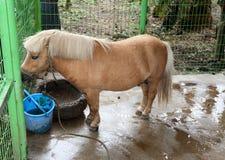 Jeju Island pony stock photos