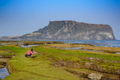 Jeju Island, South Korea. Activity at Jeju Island, South Korea Stock Images