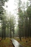Jeju Jeolmul Forest Royalty Free Stock Image