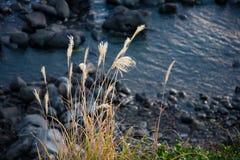 Jeju Volcanic Island Stock Photo